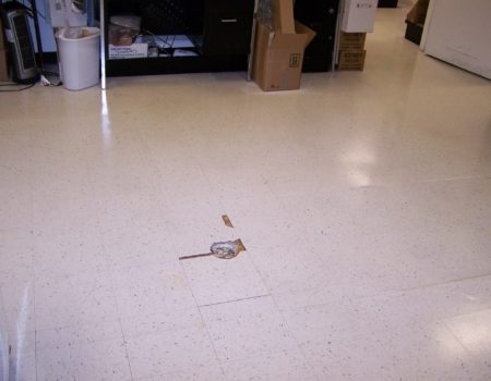 Illustrated Floor Cleaning Problems And Solutions